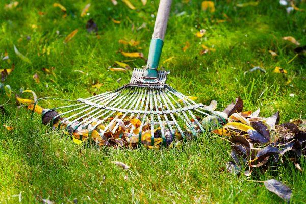 Entretien du jardin : Ratisser les feuilles mortes